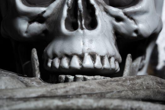 Close-up horizontal photo of the human skull