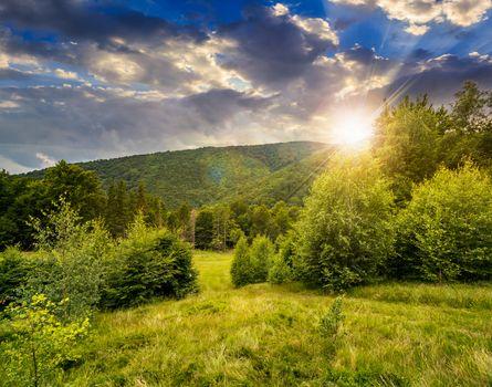 forest glade on hillside at sunset