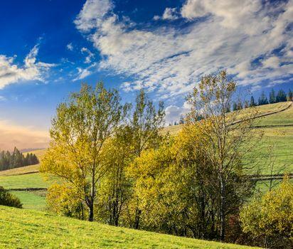 few trees on hillside glade at sunrise