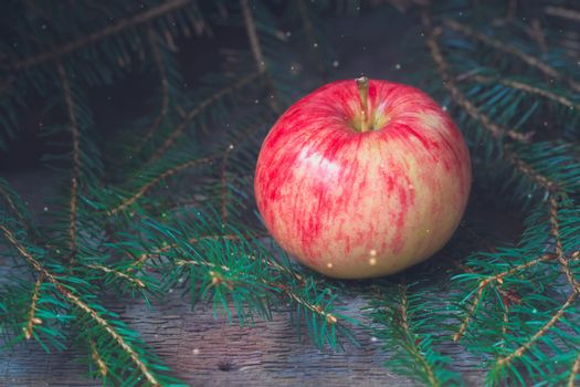 Red and yellow apple on the branches of the spruce
