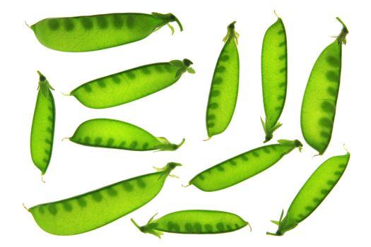 suger pea or green pea (Pisum sativum)