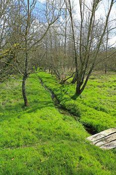 landscape swamp footbridge