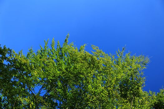 tree top blue sky