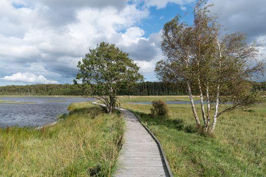 Wooden footbridge in a wetland