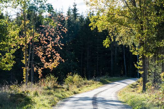 Winding gravel road with backlit colorful trees