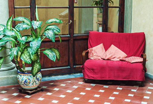 Vintage stylish couch with pillows and potted ficus plant in flower pot in classic old interior
