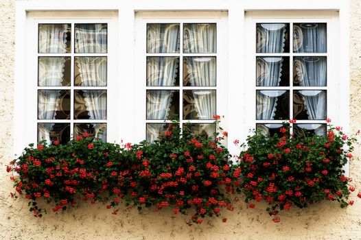 Pretty White Country Windows with Geranium Flower Sill closeup Outdoors
