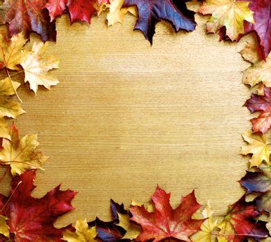 Frame of Variegated Autumn Maple Leafs on Wooden background. Top View