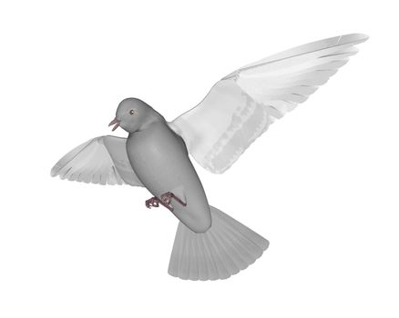 Pigeon flying - 3D render