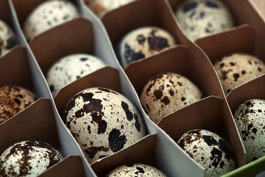 Carton box with quail eggs