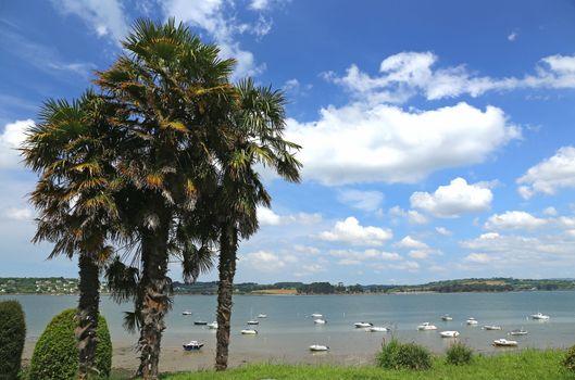 Palm trees on the promenade