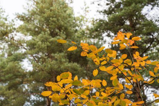 Colorful leaves at fall season
