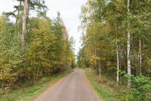 Gravel road in fall season colors