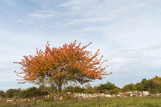 Colorful lone tree by a stone wall