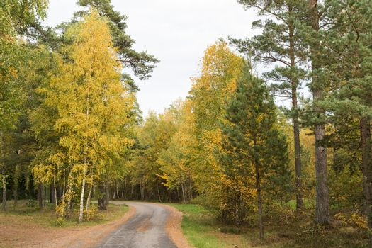 Winding country road through a fall colored forest