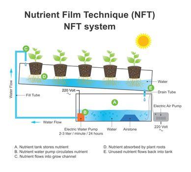 Nutrient film technique is a hydroponic technique. Education inf