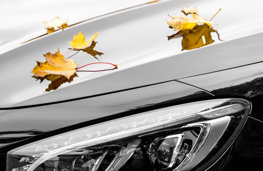 Yellow maple leaves with new luxury black car detail at autumn