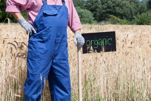Farmer standing in front of the organic wheat field