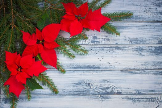 Poinsettia flowers with Christmas-tree branches on the wooden background