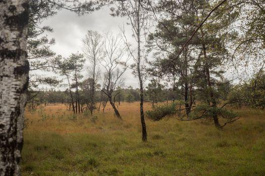 Beautiful moor landscape in the lueneburger heide