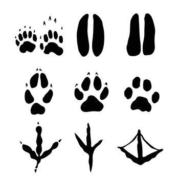 Set of Mammals and bids Footprints - Vector Illustration