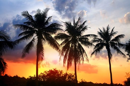 silhouette of palm trees on coast in light at sunset