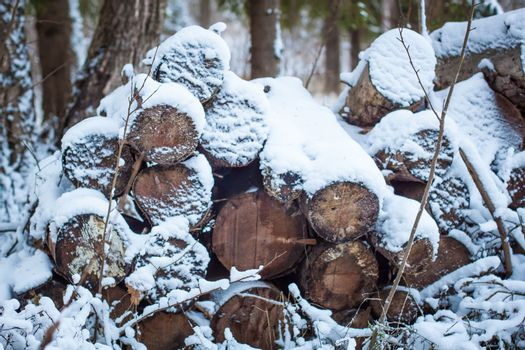 Woodlumps under the November snow