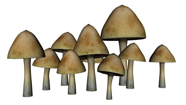 Common mushrooms isolated in white background - 3D render