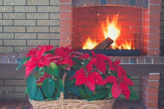 Poinsettia flowers isolated in vintage basket, fireplace, brick wall, romance. Copy space. Toned