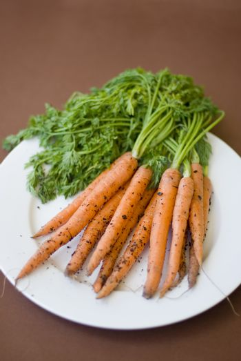 Bunch of fresh raw carrots with their leaves