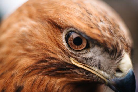 sight of a bird of prey close up