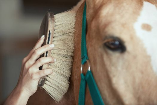 Woman grooming horse in stable