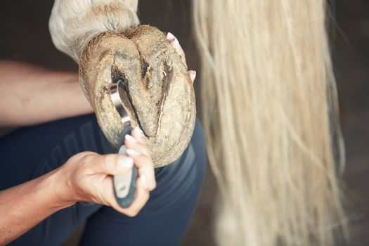 Man cleaning horse hoof