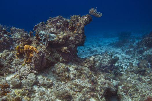 Carribean coral reef