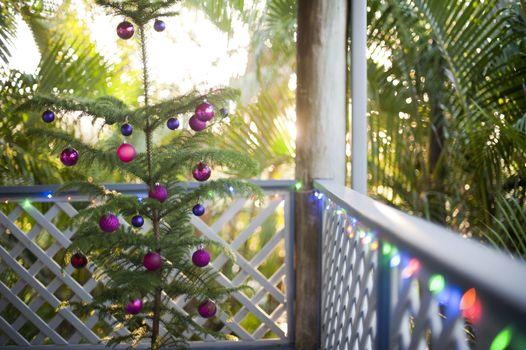 Fresh natural evergreen Christmas tree