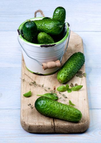 Arrangement of Fresh Raw Cucumbers with Greens in White Bucket on Cutting Board closeup on Blue Wooden background
