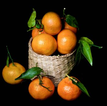 Fresh Ripe Tangerines with Leafs and Stems in Wicker Cask isolated on Black background