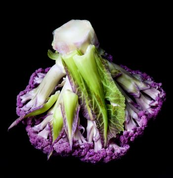 Fresh Raw Purple Cauliflower with Leafs Bottom Up isolated on Black background