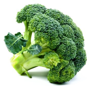 One Fresh Ripe Raw Fresh Broccoli with Leafs closeup on White background