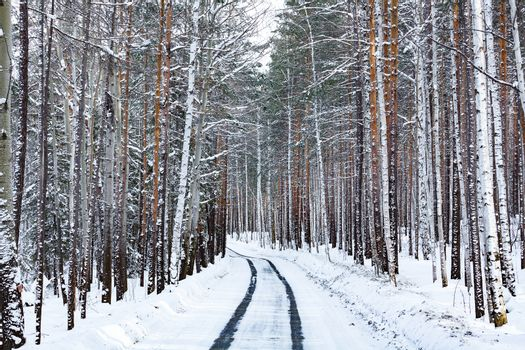 Road in winter forest. Snowcovered trees