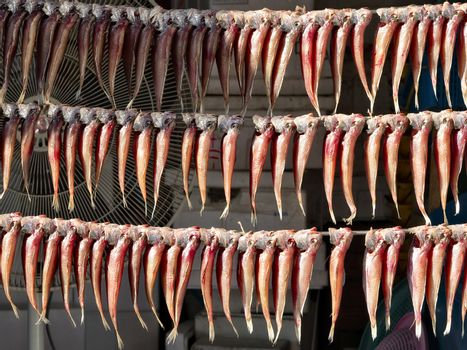 fish hung up to dry for preservation