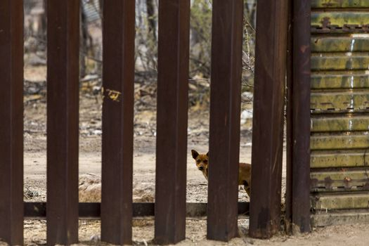 A dog on the Mexican side of the United States border wall looking north through the wall