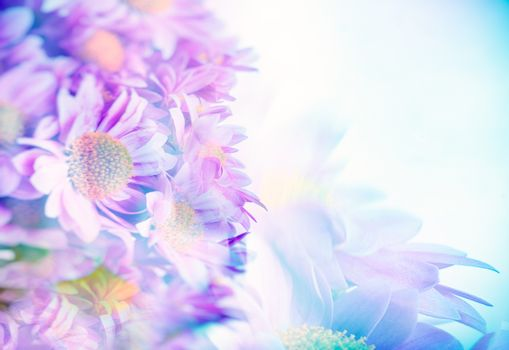 Beautiful gentle daisy flowers