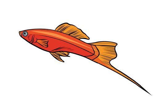 Isolated swordtail aquarium fish