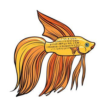 Isolated Cockerel aquarium fish