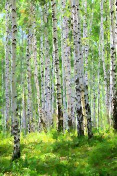 summer green birch forest