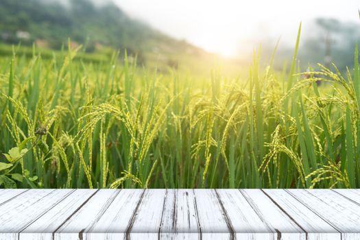 Empty wooden table on rice fields