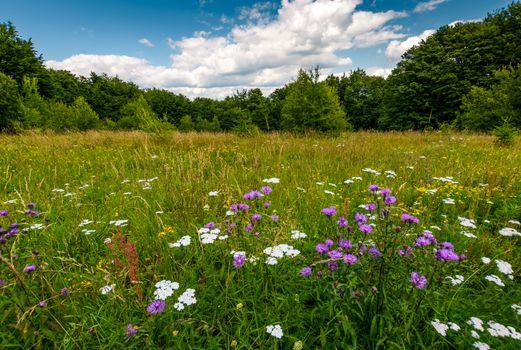 grassy glade with wild herbs