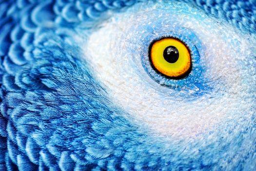 Beautiful parrot eye