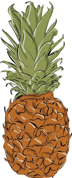 Fresh ripe pineapple isolated on white white background.